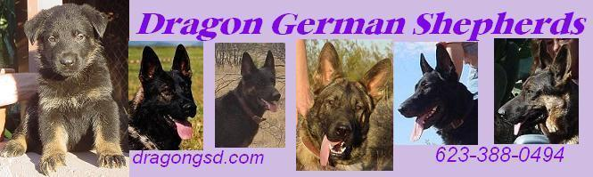 Dragon German Shepherds